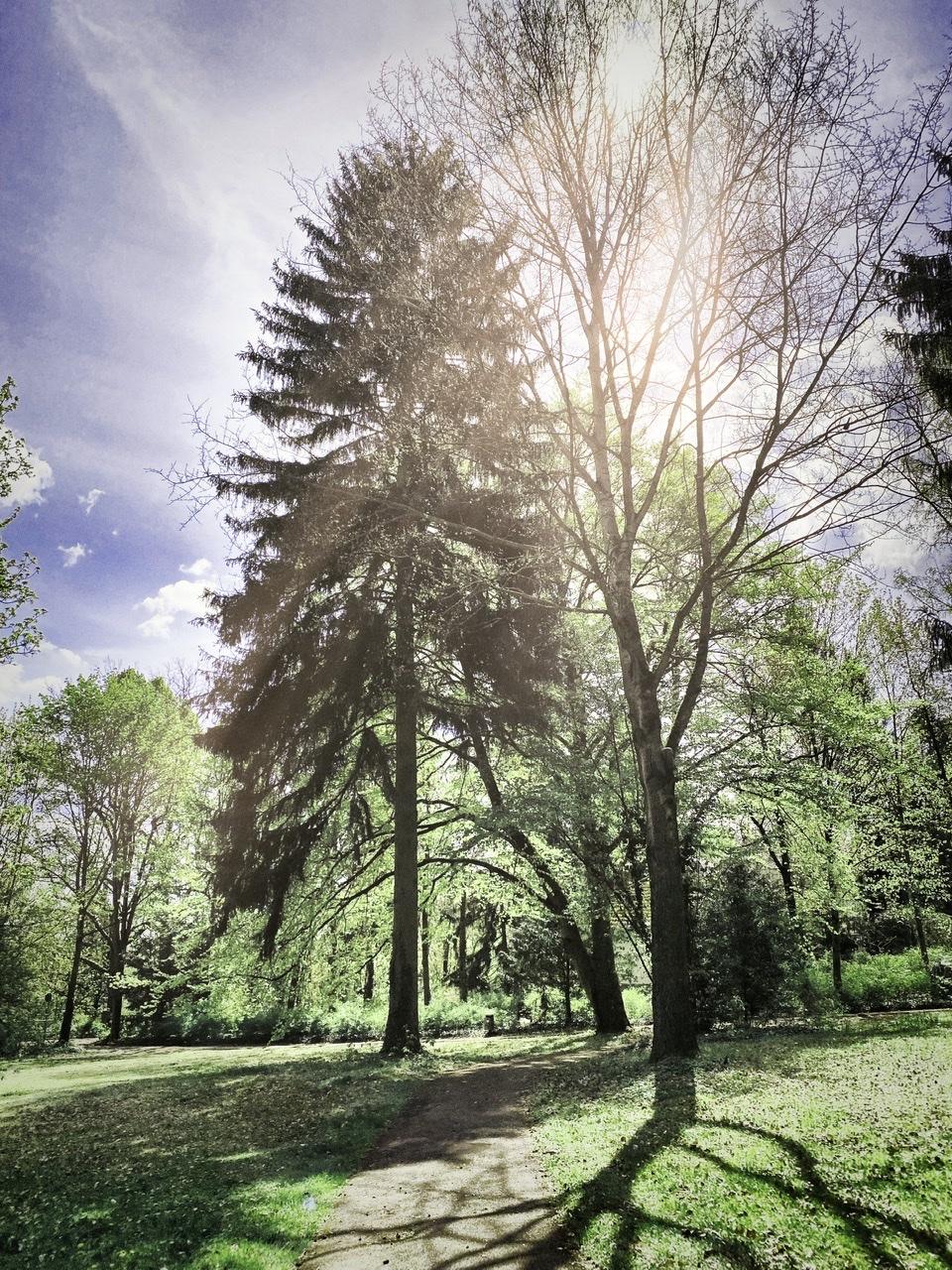 Einsam im Wald ….