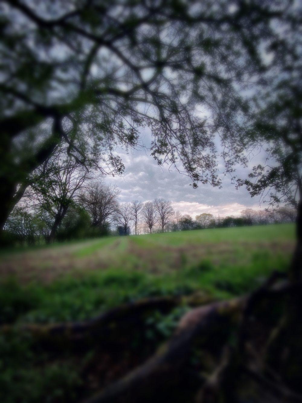 Tief im Wald (First Insta Reels)