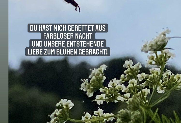 Blüten der Liebe…