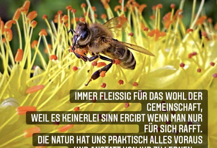 Natur … 3.0