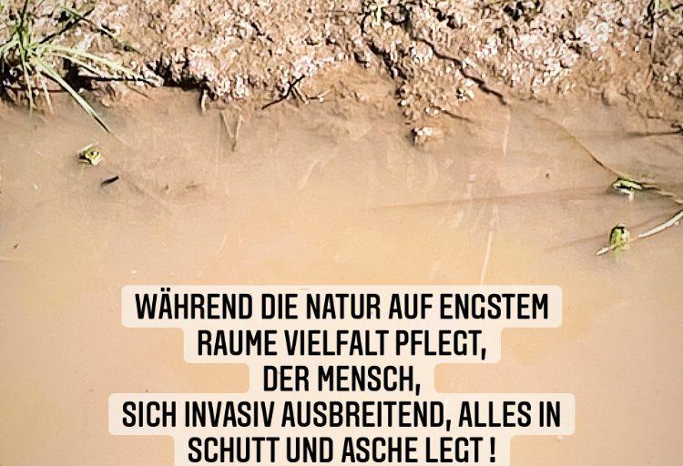 Naturvertippung Frosch 2